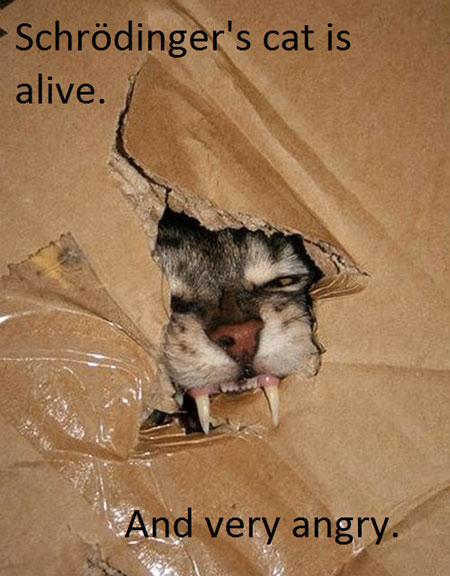 cat box dead alive